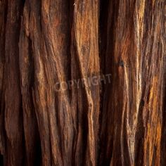 the image of the wood texture mural
