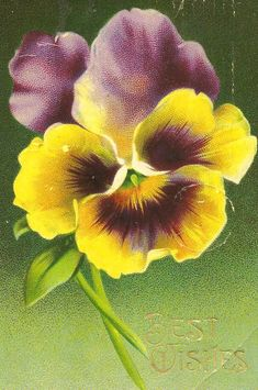 https://flic.kr/p/byNVqR | A Big Pansy | One of the nice vintage pc's that i bought yesterday at the Vintage pc Show. i was sorting through my pressed flowers recently & decided to place them in an album where i could see & enjoy them. i'd found some lovely pansies in an old book that i bought last year.