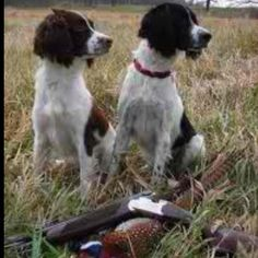 Reminds me of when my dad and I go hunting with our English springer spaniels. :)