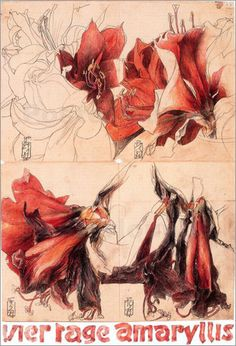 horst-janssen-4-tage-amaryllis-249-13988.jpg 341×500 pixels