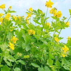 Herb Garden, Herbalism, Health And Beauty, Nature, Plants, Google, Herbal Medicine, Naturaleza, Herbs Garden