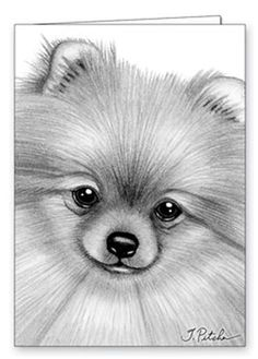 Image result for #pomeranian Coloring Pages