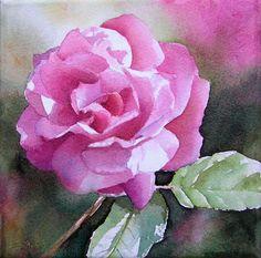 Pink Rose in Watercolor, Rosa Rose in Aquarell