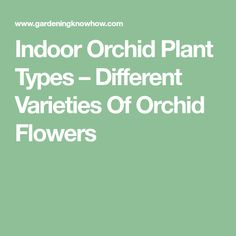 Indoor Orchid Plant Types – Different Varieties Of Orchid Flowers
