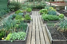 The timber paths between these raised beds make for easy access. You could maybe upcycle pallets. | The Micro Gardener