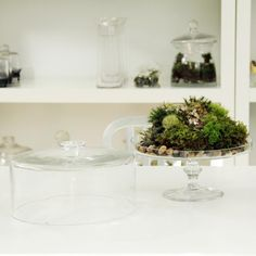 DIY TERRARIUMS / GREENHOUSE :: Cake Stand Terrarium...or could also be used as a greenhouse for nurturing back sick or sad plants!