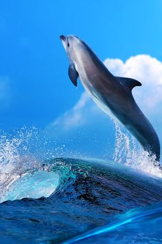 Dolphin tours and snorkeling tours in Panama City Beach. Dolphin cruises in Panama City Beach. Underwater Creatures, Underwater World, Vida Animal, Water Animals, Wale, Beautiful Ocean, Sea Waves, Tier Fotos, Panama City