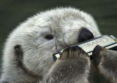 cute otter pictures - Bing Images