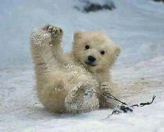 Isbjørnbaby