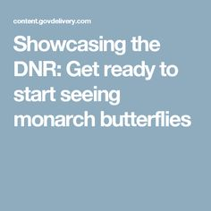 Showcasing the DNR: Get ready to start seeing monarch butterflies