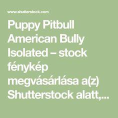 Puppy Pitbull American Bully Isolated tartalmú stockfotó (szerkesztés most) 1020441406