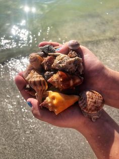 Are you ready to cruise the waters of Southwest Florida for fishing, shelling, dolphin watches, sunsets surrounding Sanibel and Captiva Island? Sanibel Island Shells, Captiva Island, Sea Shells, Shell Game, Florida Adventures, Fort Myers Beach, Shell Beach, Cape Coral, White Sand Beach