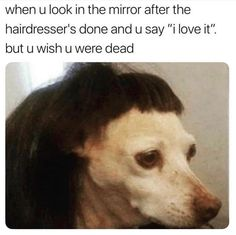 For Dog lovers.Here is collection of some Dank memes dogs that are so funny and make you laugh.Just scroll down and keep enjoy these Dank memes dogs.Read This 26 Dank Memes Dogs All Meme, Stupid Funny Memes, Funny Animal Memes, Funny Relatable Memes, Funny Animals, Funny Stuff, Funny Gifs, Funny Videos, Memes Humor