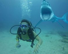 Photobomb : Le Requin