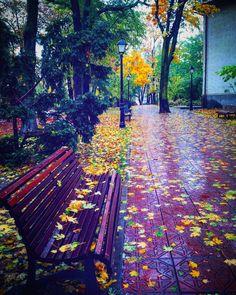 #favseason #novemberfalls #autumnlove #leaves #mykindoflove #suceava #romania 🍁🍁🍁