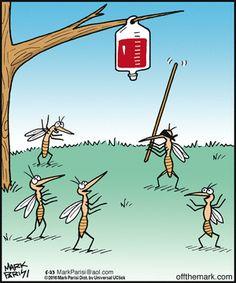 Off the Mark mosquitos Cartoon Jokes, Funny Cartoons, Funny Comics, Funny Puns, Haha Funny, Hilarious, Funny Stuff, Mosquitos, Science Humor