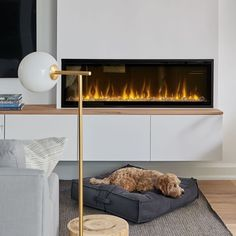 This dog is definitely living his best life! Great pic from @casellihearth and @decorhappy featuring our Dimplex Ignite XL! ⁠ ⁠ The Ignite XL has some pretty cool features:  ⁠1) The unit offers a clean-face design with flawless panoramic views.⁠ ⁠2) Quickly warms a room by delivering maximum heat output and reproduces a natural flame effect.⁠ ⁠3) You can choose from a variety of brilliant color themes or cycle through a range of colors using the prism mode, freezing on the hue of your…