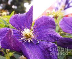 Patriotic purple