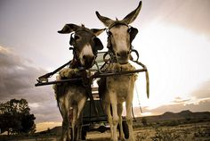 Donkey cart in the Karoo