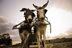 Donkey cart in the Karoo