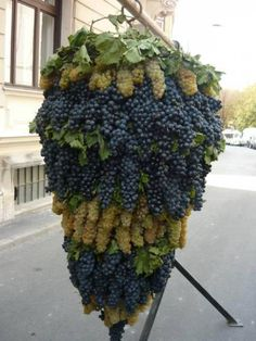 A huge, lush display of grapes grown in Israel - a land that has been developed from desert and is now a key producer of fruits and much more. Armenian Recipes, Hungarian Recipes, Hungarian Food, Armenian Food, Armenian Culture, Cultura Judaica, Wine Vineyards, Jerusalem Israel, Suppers