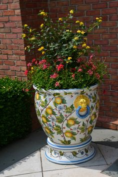 Yellow lantana standard and peach pink cascading ivy geraniums. Container by Deborah