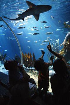 Das #SeaLife in #München ist einer unserer Partner und bietet Ihnen einen tollen Blick in die #Unterwasserwelt.