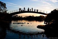 Ponte Parque Ibirapuera / Entardecer no Parque do Ibirapuera, São Paulo - SP / Dados da foto: ISO 100, F5.6, 1/250s
