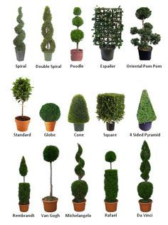 Boxwood Topiary! Here is a guide to know the shape and styles whether they be faux or real. Always transitional from outdoors/in, seasonal décor.