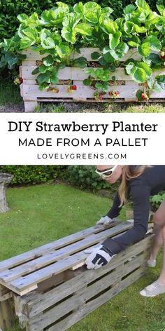 How to build a Strawberry Planter using just a single wood pallet. It takes an afternoon to build and allows you to grow strawberries raised off the ground and on patios garden diy planter boxes How to Make a Better Strawberry Pallet Planter Herb Garden Pallet, Veg Garden, Garden Planters, Garden Beds, Palette Herb Garden, Home Vegetable Garden Design, Raised Herb Garden, Micro Garden, Rocks Garden