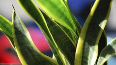 9 Air-Cleaning Houseplants That Are Almost Impossible to Kill