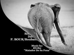 The copyrights to the music and lyrics are reserved by the artist. Video created and produced by Elephant Advocacy. Elephant Videos, Elephant Gif, Call To Action, Elephants, Compassion, Ivory, Amazing, Music, Artist