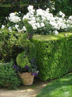 Back to Garden Topiary Landscaping Ideas Main: