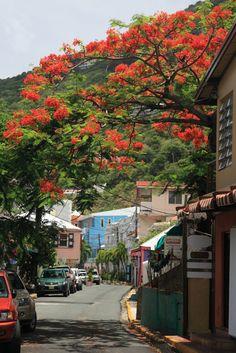 Road town in Tortola   BRITISH VIRGIN ISLANDS.  (by SunCat)