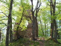In forest, castle, ancient, ruins, medieval