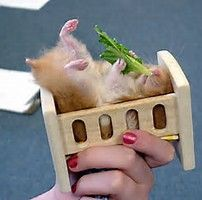 I had a teddy bear hamster named Harvey. He was such a smart guy. Bear Hamster, Hamster Names, Hamsters As Pets, Hamster Life, Cute Hamsters, Rodents, Hamster Eating, Animals And Pets, Baby Animals
