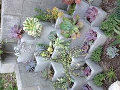 Cinder block succulents, maybe spray paint blocks?