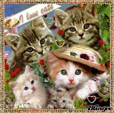 I love cats Cute Cats And Kittens, I Love Cats, Crazy Cats, Kittens Cutest, Most Beautiful Animals, Beautiful Cats, Cute Wallpaper Backgrounds, Cute Wallpapers, Good Night Prayer
