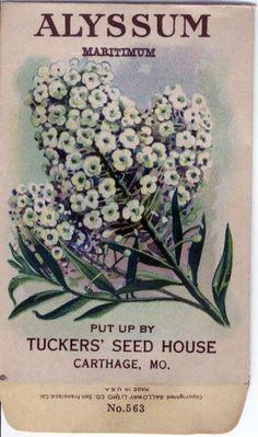 Guest Room -- Vintage Flower Seed Packet Tuckers Seed House by gardenlelah, $6.00
