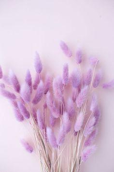 Lavender Aesthetic, Flower Aesthetic, Purple Aesthetic, Flower Phone Wallpaper, Purple Wallpaper, Iphone Wallpaper, Bunny Tail, Pampas Grass, Jolie Photo