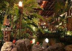 Disney's Polynesian resort! Such a good place to relax, right in the lobby. There's always a frog or a lizard around you!