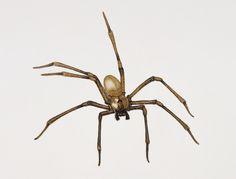 Spinnenbeet op grote hoogte met enge gevolgen - National Geographic Traveler Nederland/België Violin Spider