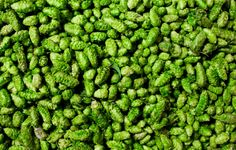 There's one kind of beer you need to drink this fall, and it's not an Oktoberfest lager. Here's why you need wet-hopped beers in your life.