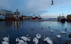 18248373   Flickr - Photo Sharing! Stavanger