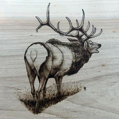 Detail of elk wood burning