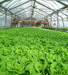"""""""Slegers Premium Organics offers the discerning chef and consumer a variety of certified organic living lettuces, salad greens, mini and micro seedlings and sprouts. Let our colourful and unique living greens add another dimension to your cuisine."""" #LFPCertified"""