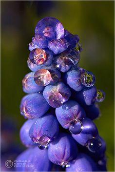 Floral Gem, Oregon, USA