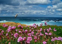 Land, Sea & Sky and a seagull passing by ;⟩ #landscape #seascape #sky #clouds #flowers #blooming #bloom #blossom #fleurs #mer #ocean #ciel #nuage #paysage #wallpaper #photography