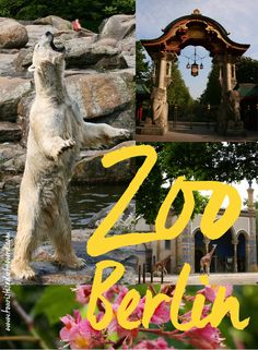 Zoo Berlin • An experience at the Berlin Zoo • Tourist is a Dirty Word Blog • Germany Travel