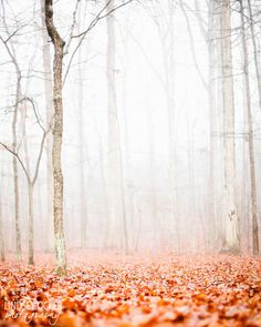 Fall / Image via: Lindsay Ocker #fall #autumn